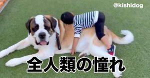12万イイねの超・大型犬!飼育歴34年の投稿者に《セントバーナードの魅力》を聞いてみた