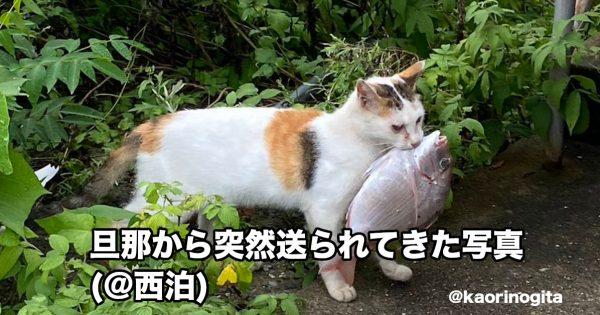 サザエさんこっちです。絶妙にジワる「シュール猫」8選