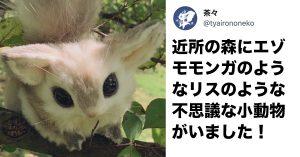 森で撮影された《目がクリクリの小動物》その正体に「可愛すぎる」「ポケモンかな?」