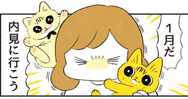 猫飼いのあなた必見!「初めてのお引っ越し with 猫」は波乱だらけのようです…