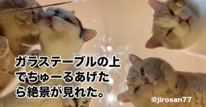 猫好きさん悶絶な「ちゅ~るの気持ちになれる絶景」が永遠に見てられそう…!