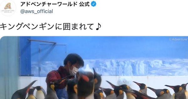 【アドベンチャーワールド】ペンギンまみれの飼育員さんに羨望の声「ここが天国ですね」
