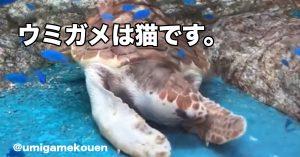 【完全に一致】《ウミガメ=ねこ説》の動かぬ証拠が130万再生を突破