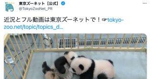 上野動物園の《パンダ一家の近況ムービー》にファン大興奮「たまらなく可愛い」