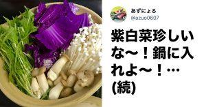 ハロウィンにいかが?紫白菜が主犯の《毒属性っぽい水炊き》にTwitter13万いいね!