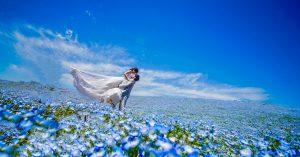 世界の絶景【ネモフィラの青の絨毯】でフォトウェディング!最高のロケーションで最高の思い出を