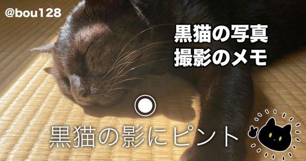 17万フォロワーの猫アカウント直伝!失敗知らずの《にゃんこ撮影術》に目からウロコでした!
