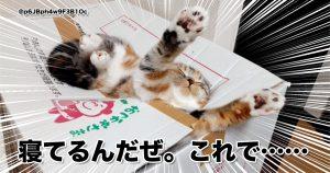斬新すぎる「猫の寝相」は笑うからやめてw 10選