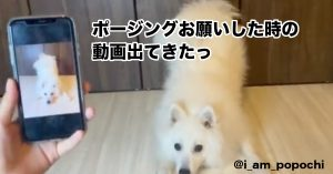 【天才ワンコ】写真を見せるだけで「ポーズ再現してくれる犬」にTwitterで反響